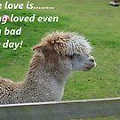 True Love 8 by Dawnsuzanne