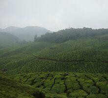 Green Tea Waves - India by vasanthkumar