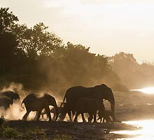 Gathering At Dusk by Scott Carr