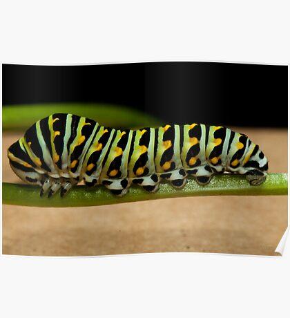 Backyard Caterpillar Poster