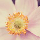 Windflower Close-Up by mariakallin