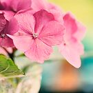 Hydrangeas and Bokeh by mariakallin