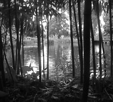 Bamboo around the Pond by kimathy