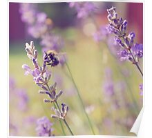 Lavender Bumblebee Poster