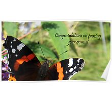Congrats on passing exams card-Red Admiral Butterfly Poster