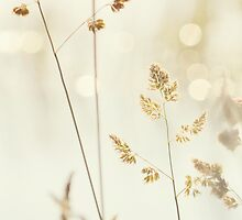 Grass and Bokeh by mariakallin