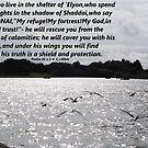 Psalms 91v 1-4  Gulls in Flight by Dawnsuzanne