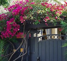 Rose Covered Door by Karen Checca