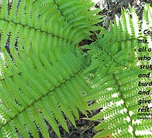 Matthew 11 Set in Fern  by Dawnsuzanne