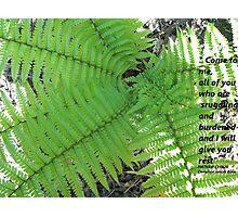 Matthew 11 Set in Fern  Photographic Print