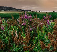 Early Light at Finley Refuge by Charles & Patricia   Harkins ~ Picture Oregon
