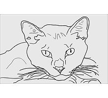 Hand-drawn cat Photographic Print