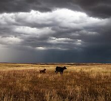 Life on the Plains by Sean Ramsey