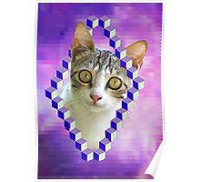 LSD CAT Poster
