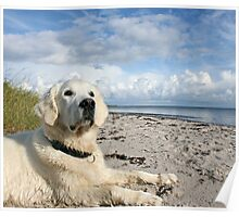 Ditte loves to watch the birds at the beach Poster