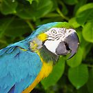 Macaw 2 by MadTogger