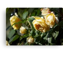 Cluster of Yellow Roses Canvas Print