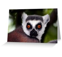 Ring-Tailed Lemur Greeting Card