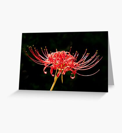 Unique Flower Greeting Card