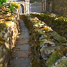 Down the Steps by Elaine123