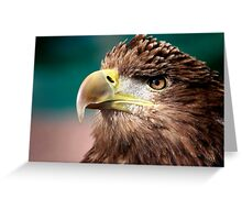 White Tailed Sea Eagle Greeting Card