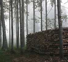Mist and firewood by tanmari
