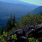 MOUNT ADAMS IN WASHINGTON STATE by Michael Beers