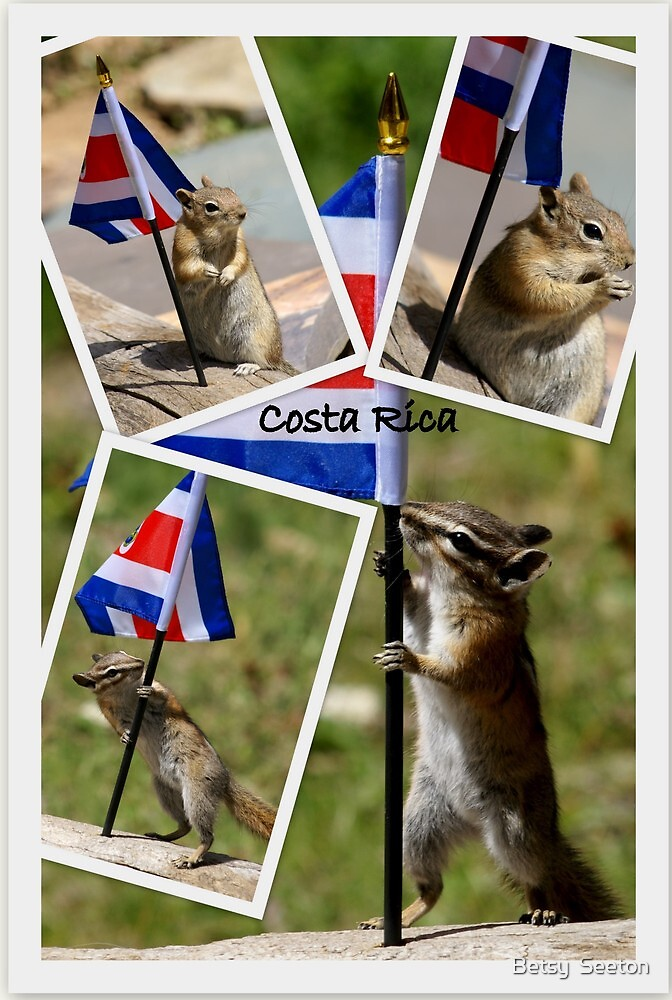 Costa Rican Animal Organization Receives High Praise by Betsy  Seeton
