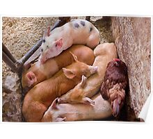 Animal - Pig - Five little piggies and a Chicken  Poster