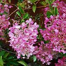 Pink Hydrangeas in the rain by Marjorie Wallace