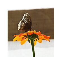 Orange Flower with Butterfly Photographic Print