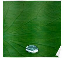 Lily Pad... Up Close & Personal Poster