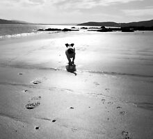 Jack Russell - Donegal, Ireland by SarahMcCaffrey