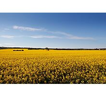Rural sea of Canola Photographic Print