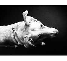 Over Dog Photographic Print