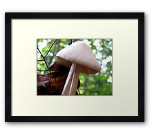 Split Stalk Framed Print