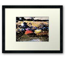 Rockpool at Lorne Beach Framed Print