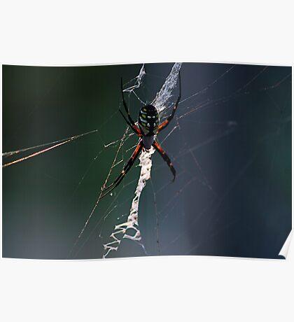 Boris The Spider Poster