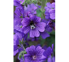 A taste for purple Photographic Print