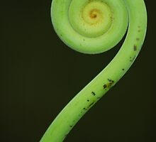 Koru by Jason Weigner