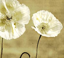 paper poppies by Clare Colins