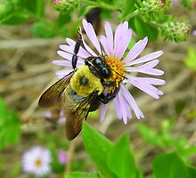 Bee at Work by Judy Wanamaker