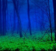 The Mayapple Forest by dlennis