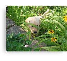 Pokey Little Puppy Canvas Print