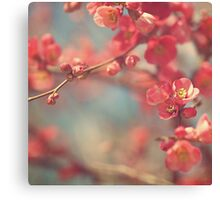 quince Canvas Print