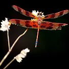 Wing Damage by Sunshinesmile83