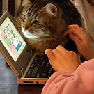 Cat learning PC skills? by Bernie Stronner