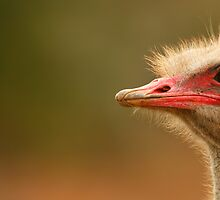 Ostrich Eye by naturalnomad