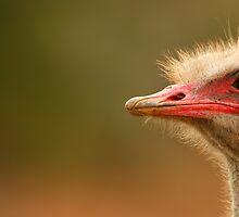 Ostrich Eye by naturalnomad
