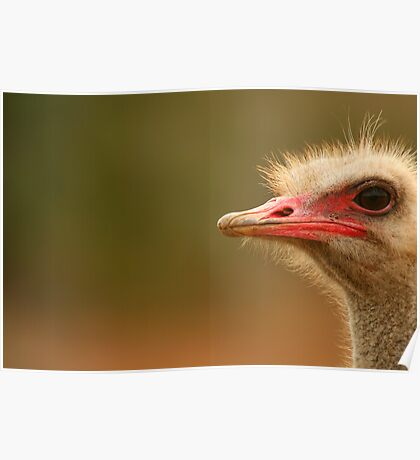 Ostrich Eye Poster